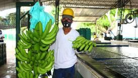 Lluvias y escasez de contenedores golpean al comercio de banano colombiano