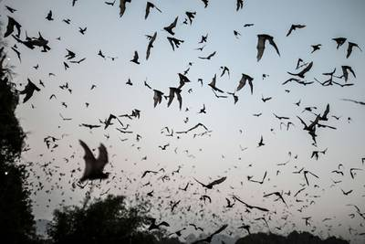 Miles de casos similares al Covid-19 aumentan el riesgo de futuras pandemias