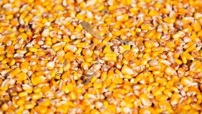 Precio de fertilizantes amenaza cosecha de Brasil, proveedor clave de maíz