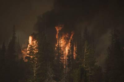 Devastadores incendios forestales generaron récord de emisiones este trimestre