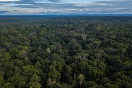 Brasil abre as portas para negociação do mercado de carbono na COP26
